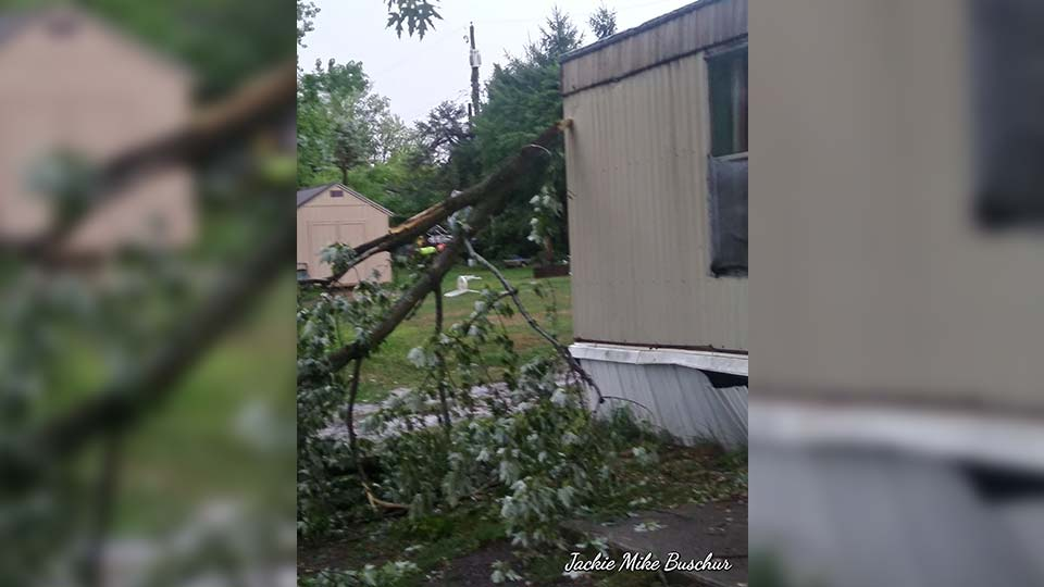 tree hits trailer Beaver Creek