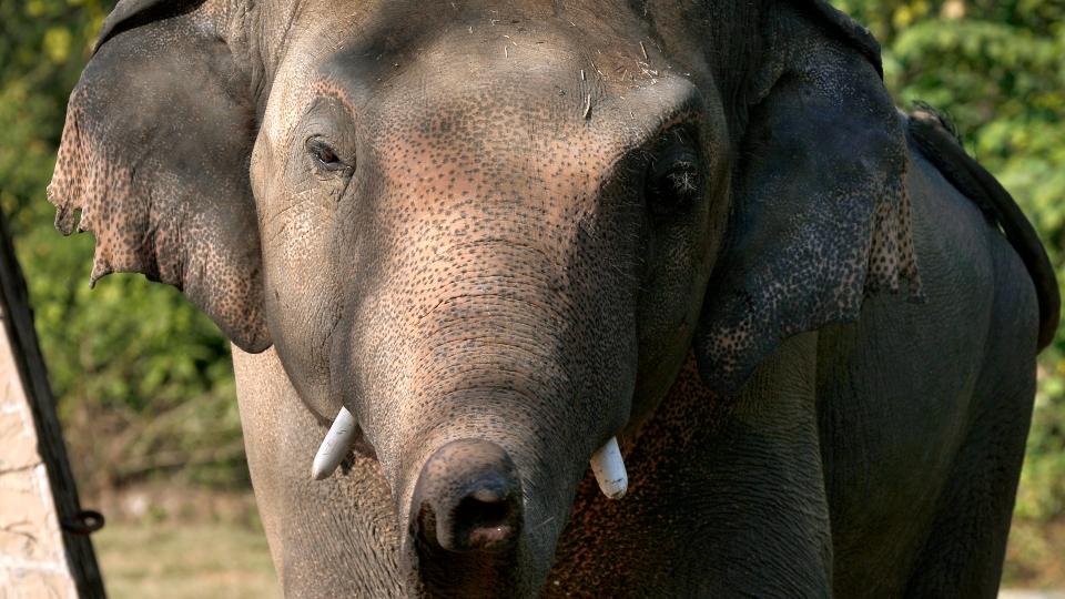 Kaavan, elephant, Pakistan