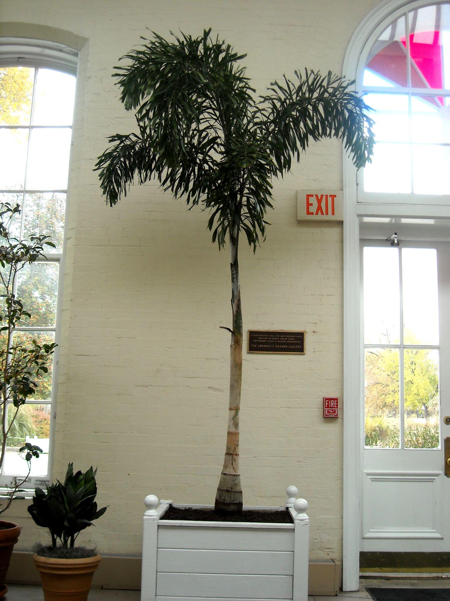 Large Indoor Planters