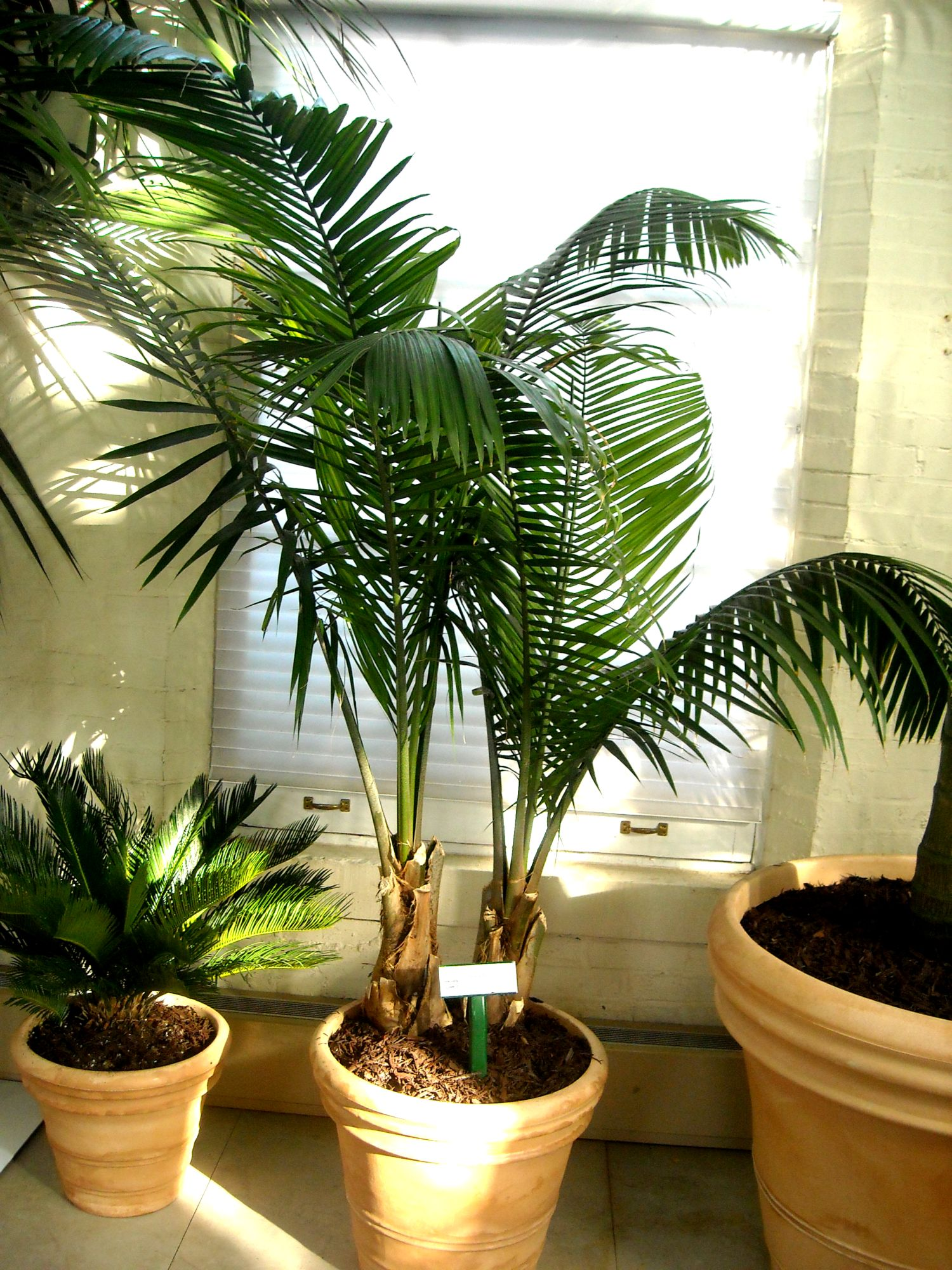 Large Green Leaf House Plants