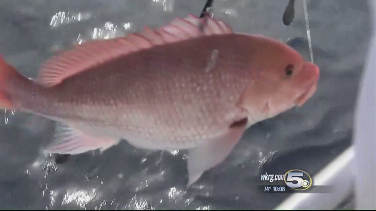 Red Snapper Protest Planned at Perdido Pass