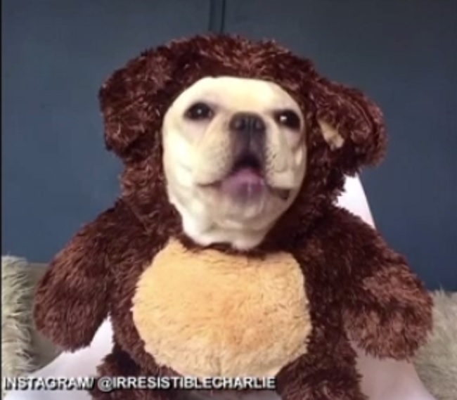 teddydog_434927