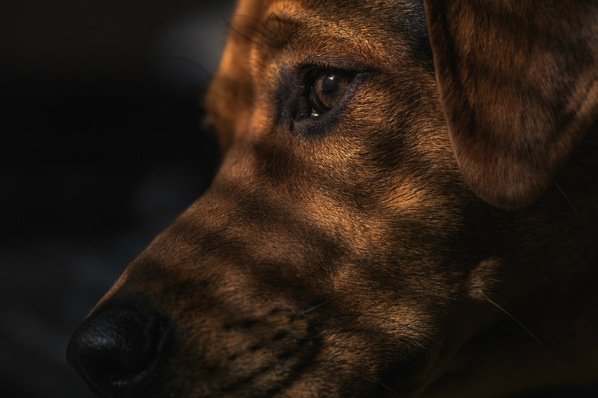 dog-1149188_1920_1531246314256.jpg