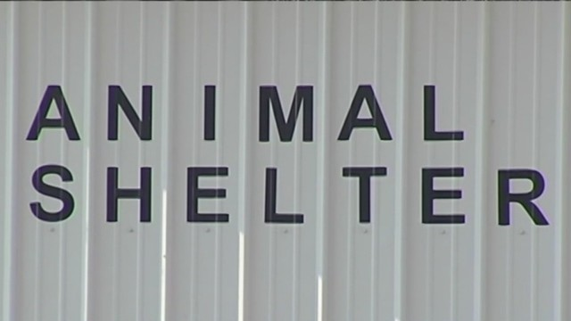 Shelter_accused_of_freezing_animals_to_e_1_51701125_ver1.0_1280_720_1534240931558_51729155_ver1.0_640_360_1534264141512.jpg