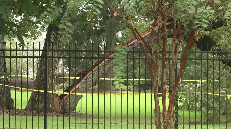 Tree falls on cars at Grove Apartments