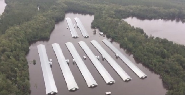 florence flooded chickens_1537366454575.jpg.jpg