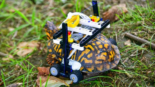 wheelchair-turtle_1538236321094_57288766_ver1.0_640_360_1538258147829.jpg