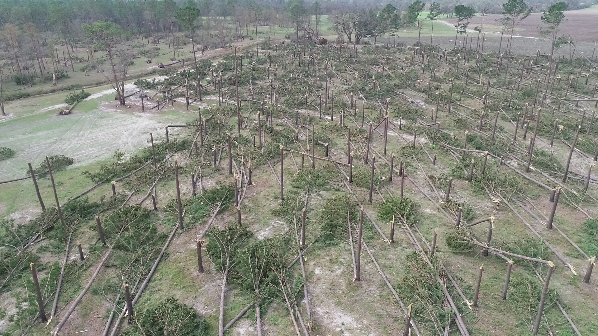 Timber loss from Hurricane Michael in Alabama