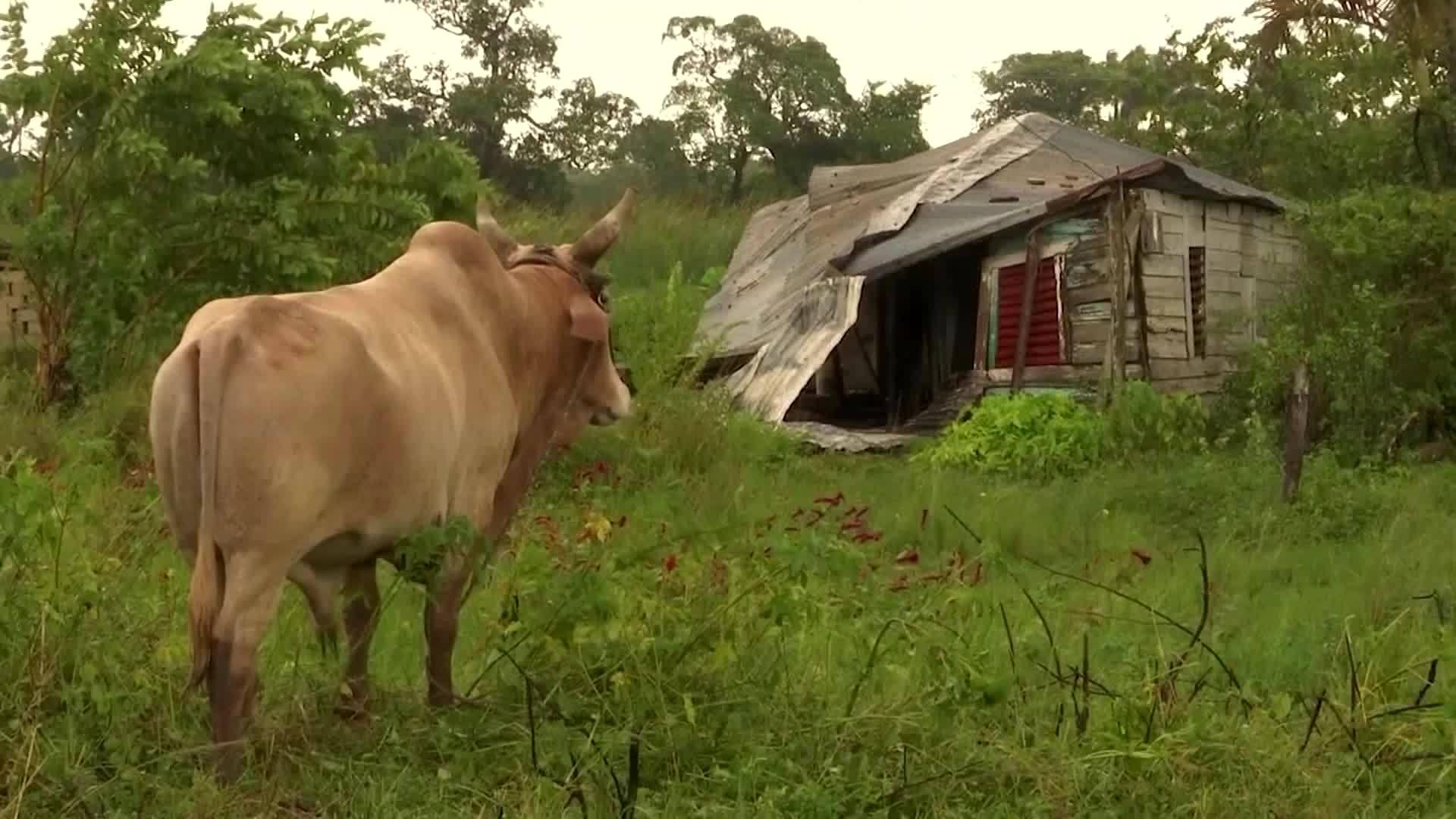 Video: Michael causes destruction in Cuba