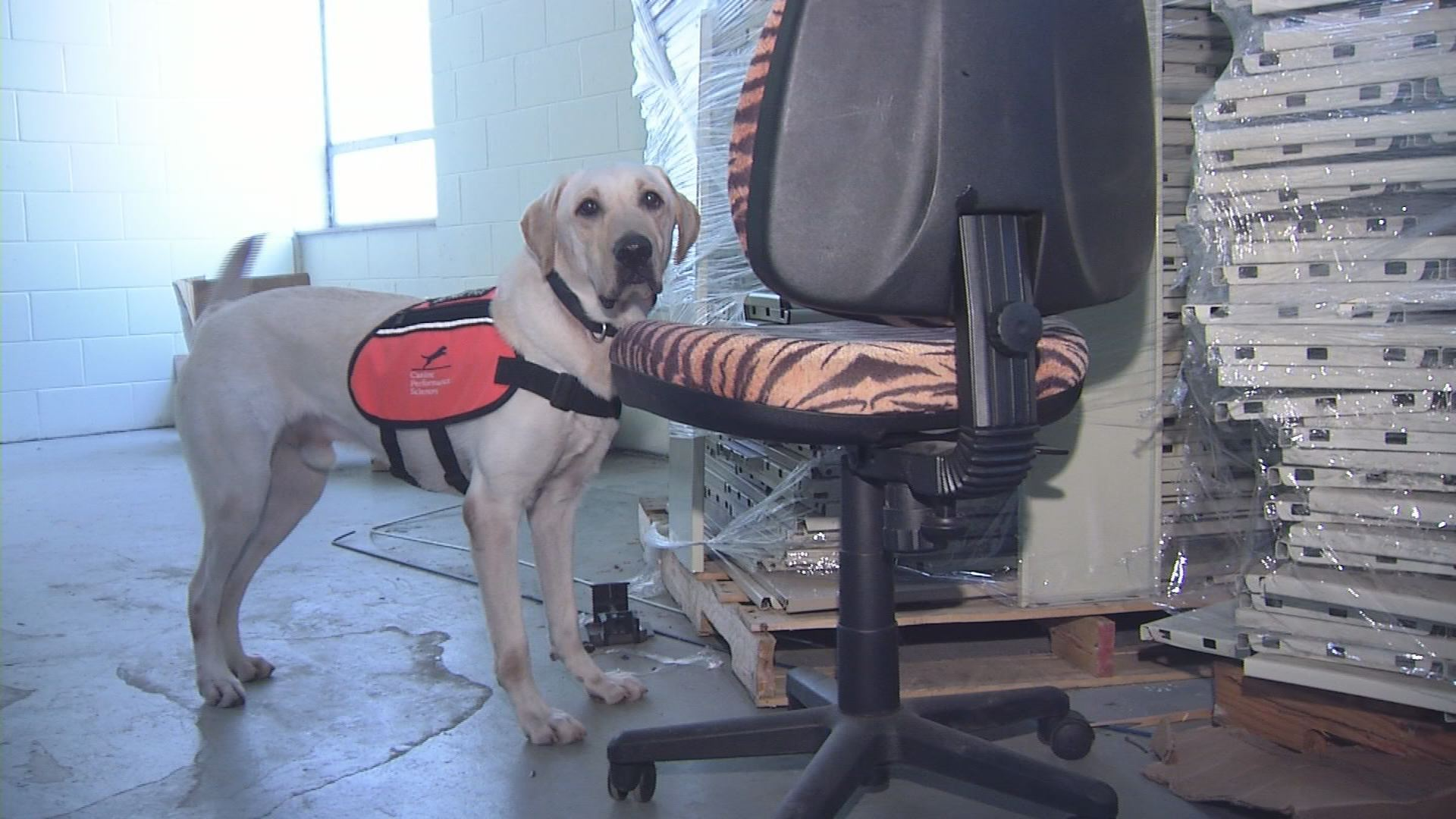 BOMB DOGS_1541127522581.jpg.jpg