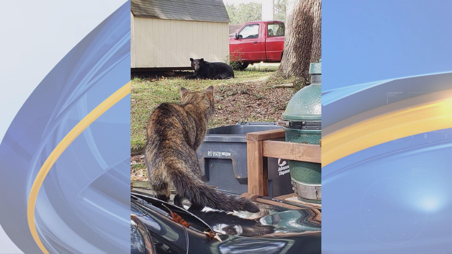 CAT V BEAR_1543088693368.jpg.jpg