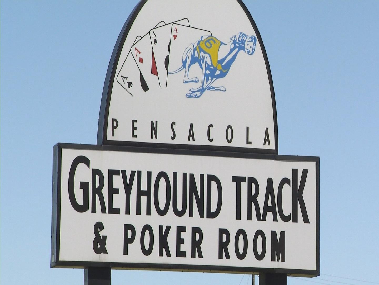 Greyhound Pic_1542058814874.jpg.jpg