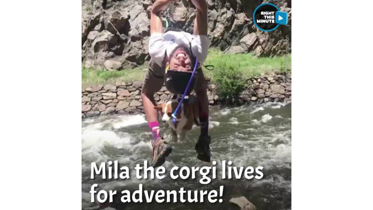 Right This Minute Snackable Moment | Meet Mila, The Adventure Corgi
