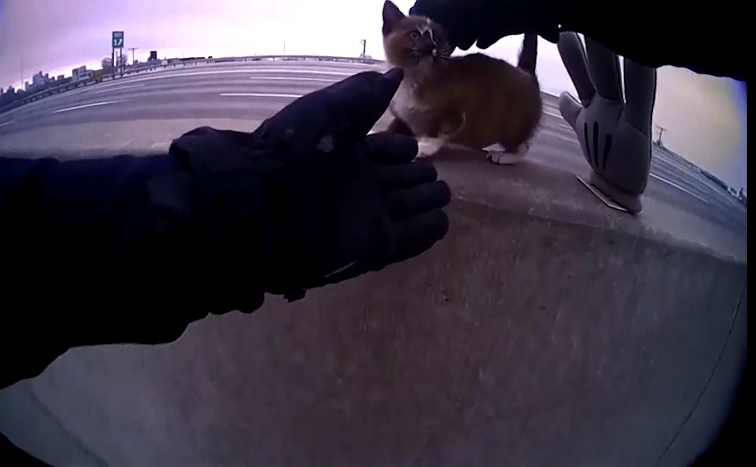 Caught on Camera: Cop rescues kitten from highway