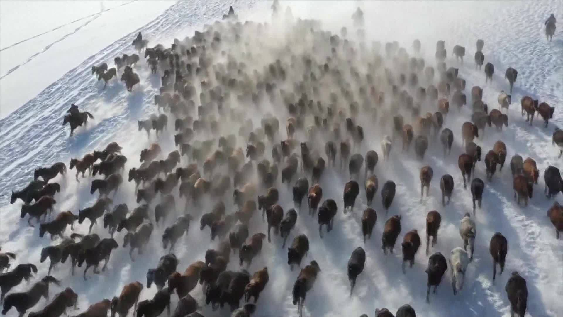 VIDEO: Thousands of horses gallop through snow