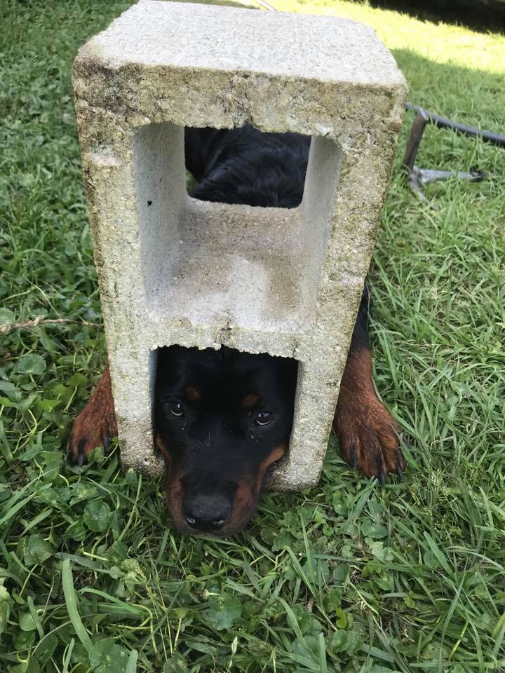 DOGS HEAD 1_1556033365754.jpg.jpg