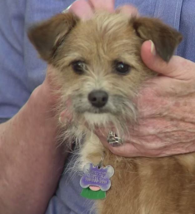 WKRG | Pet of the Week