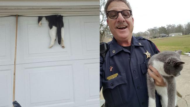 Deputy saves cat_351511