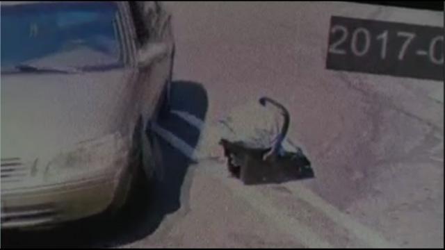 Baby left in California parking lot_428336