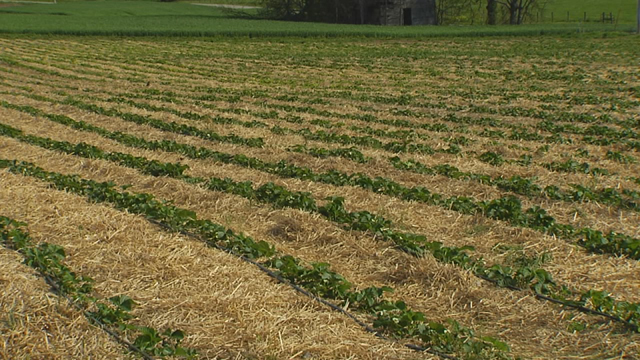 Farm planting generic_400852