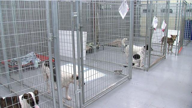 Hurricane Irma rescue dogs_460539