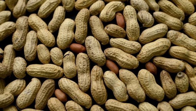 peanuts_488432