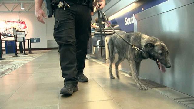 Metro airport drug dogs
