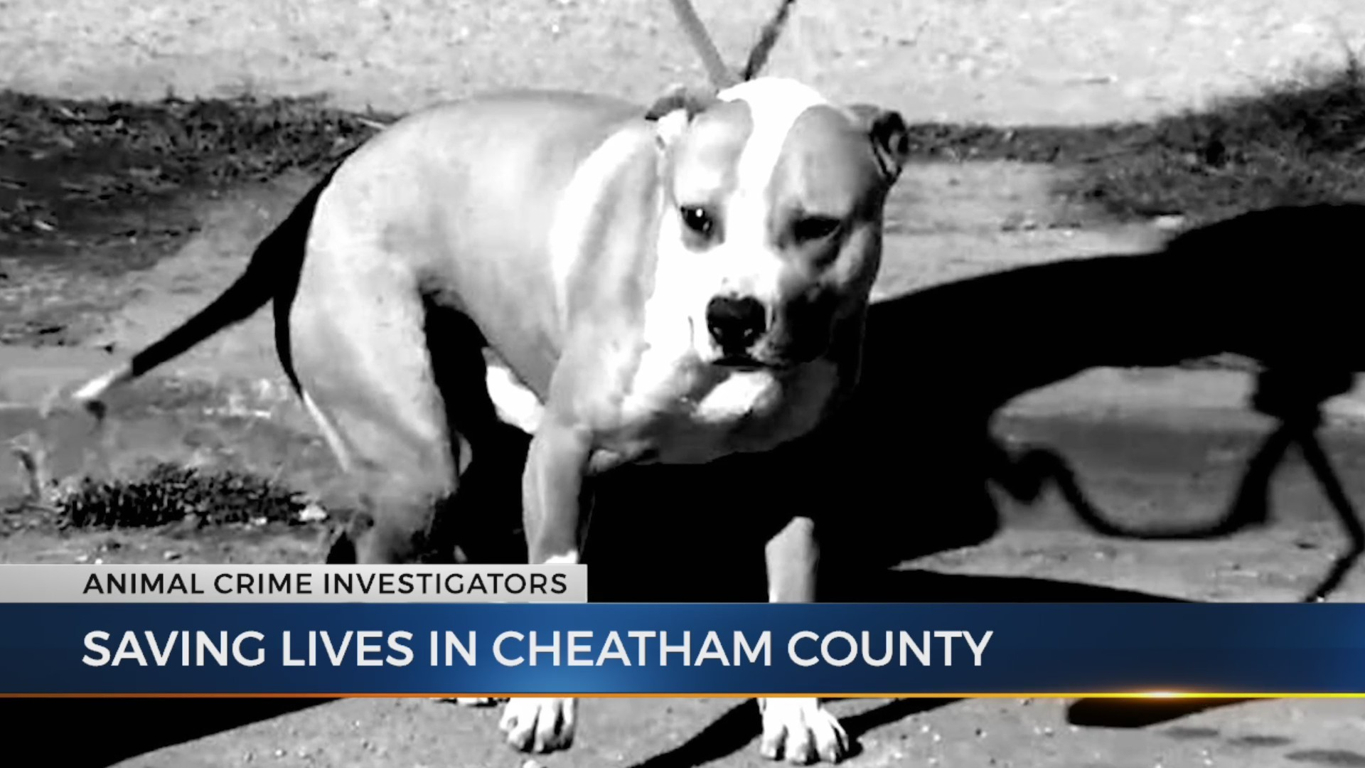 Shelter_saves_lives_across_Cheatham_Coun_0_20181011214148