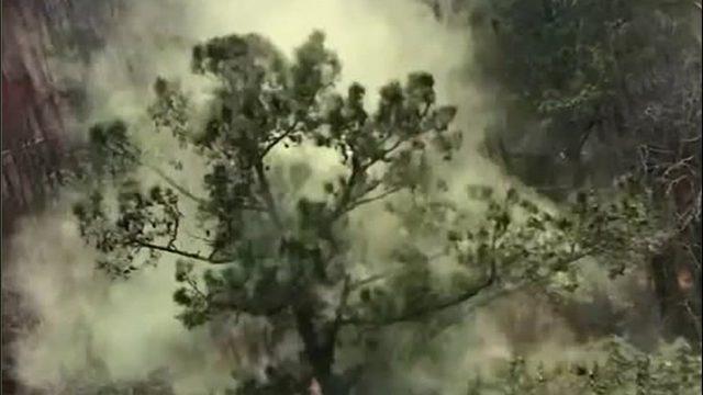 Pollen on tree_1553864888883.jpg_464201_ver1.0_640_360_1553896210349.jpg.jpg