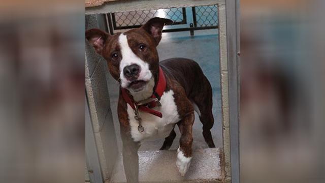 Hopkinsville dog surrender