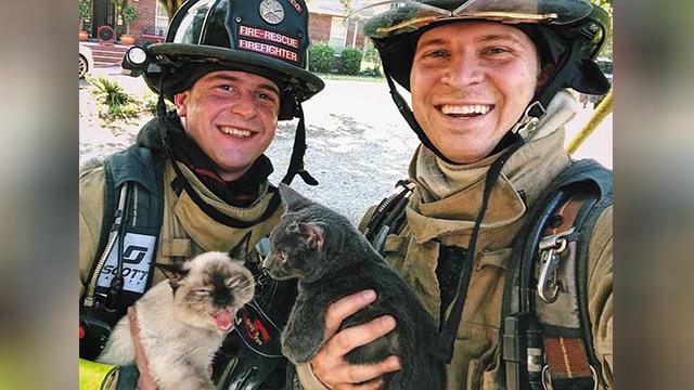 Firefighters and kittens_1558149316615.jpg.jpg