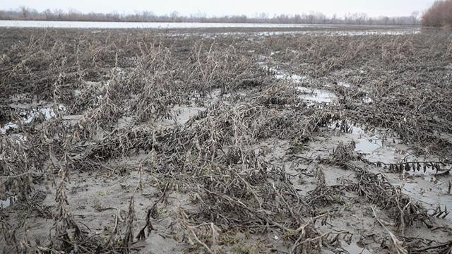 mud generic getty web_1560099755011.jpg.jpg
