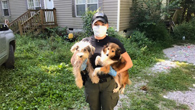 More Than 200 Animals Removed From East Tennessee House