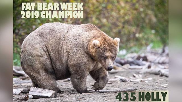 Fat Bear champion Holly