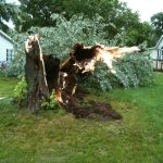 WKVI's Jerry Curtis took this picture of a storm-damaged tree Monday evening in Knox.