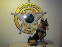 Marshall County Police K9 Arras models his bulletproof vest the county got through a grant program.