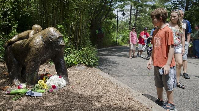 Zoo Gorilla Child Hurt_159642