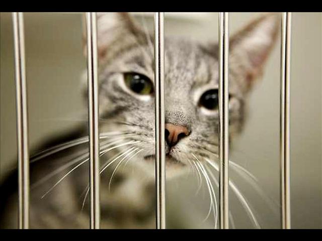Cat_156299