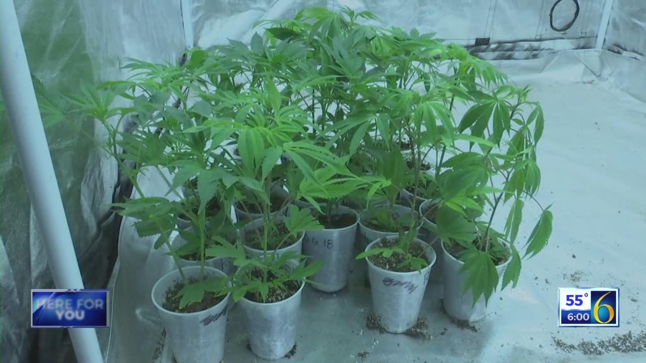 MarijuanaSkubMay2_152342