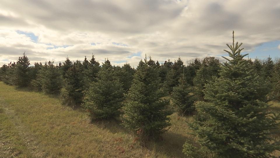 christmas tree farm_340869