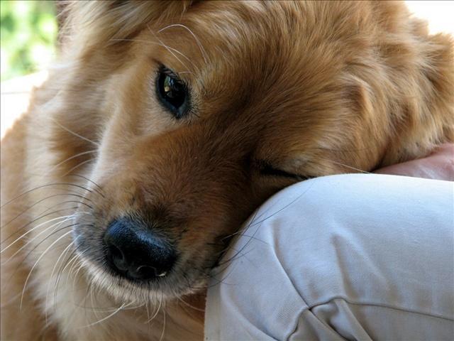 Dog_8526