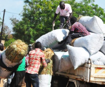 West Nile dealers hurt after charcoal ban, prices rise
