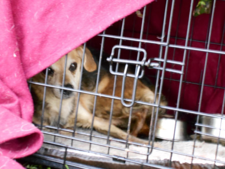 beagle-left-in-ditch-2_217124