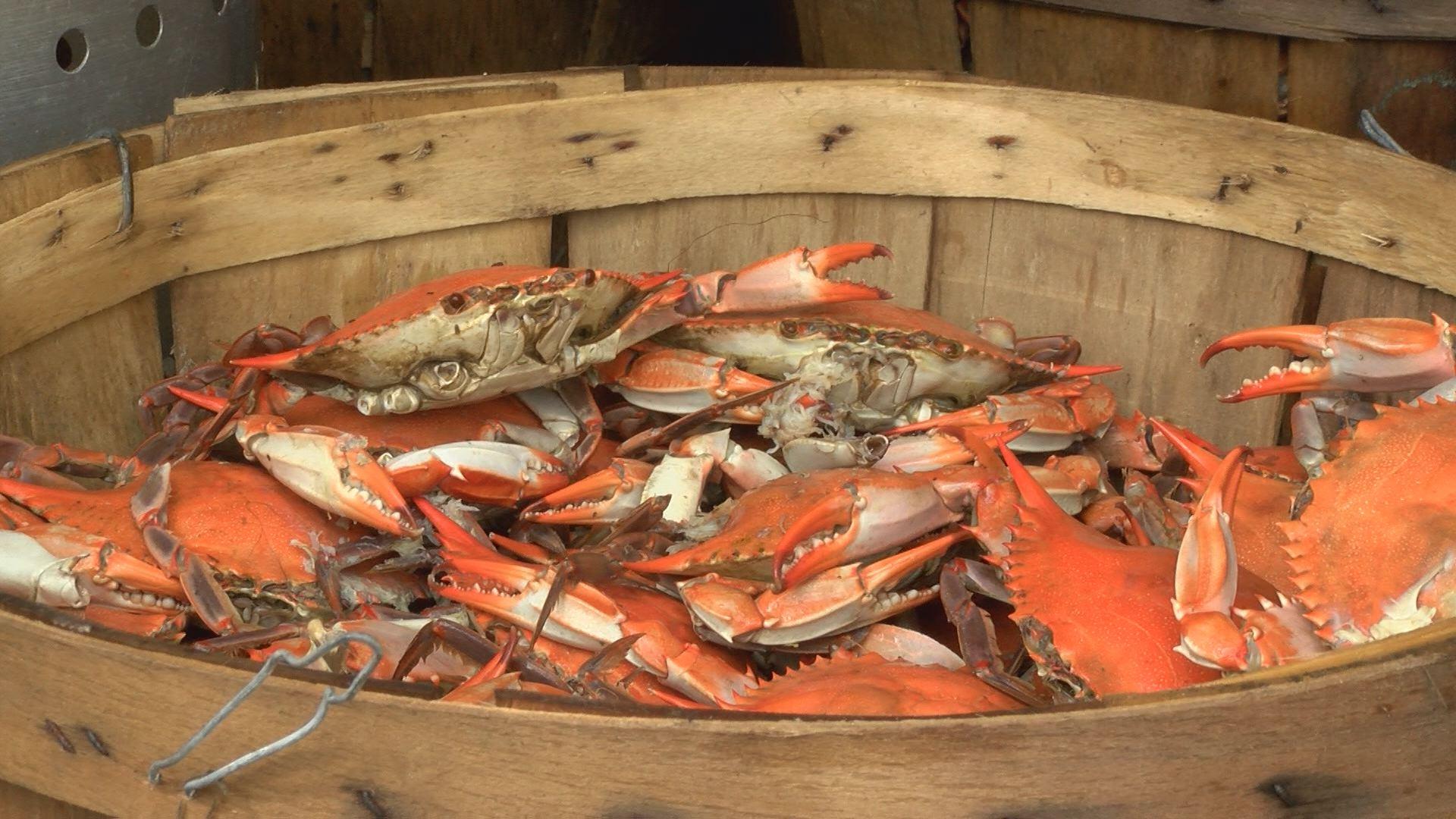 crab-festival_274302