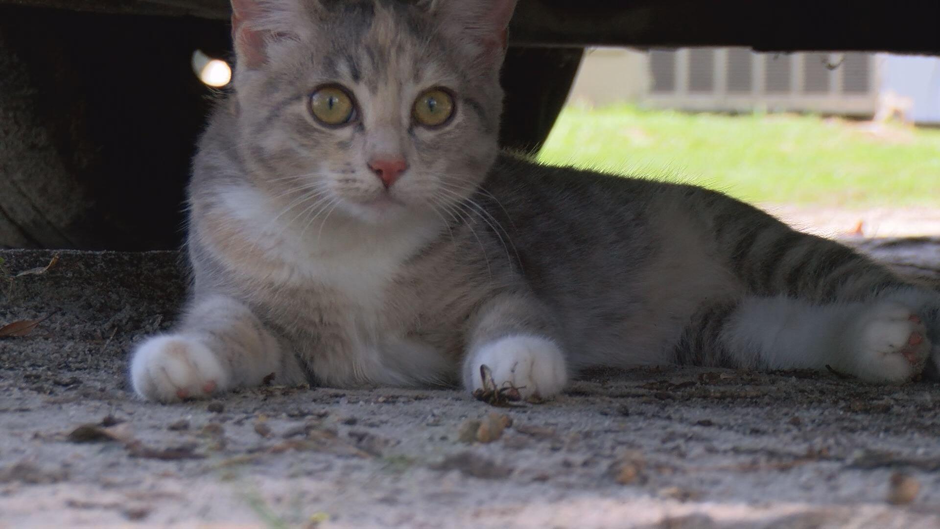 grifton cats_454998