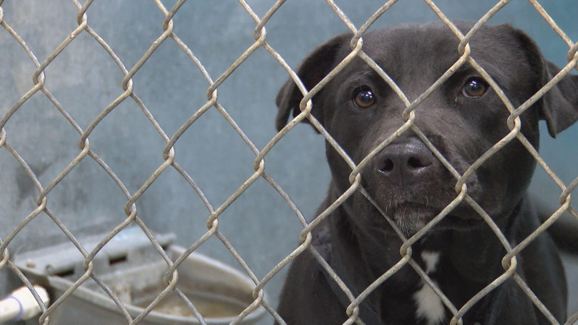 pitt-county-animal-shelter_288860
