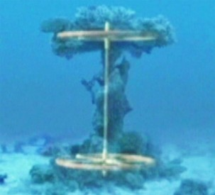Coral-encrusted object in Red Sea could be ancient Egyptian chariot wheels