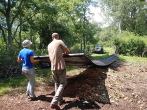 Japanese Knotweed Removal at Tifft Nature Preserve, August 2014. photo credit: WNY PRISM