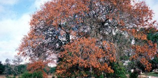 Oak Wilt: The Importance of Early Detection and Spread Prevention