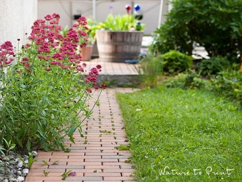 gartengestaltung pflegeleichte pflanzen nicht hacken bringt segen:  pflegeleichte pflanzen für faule